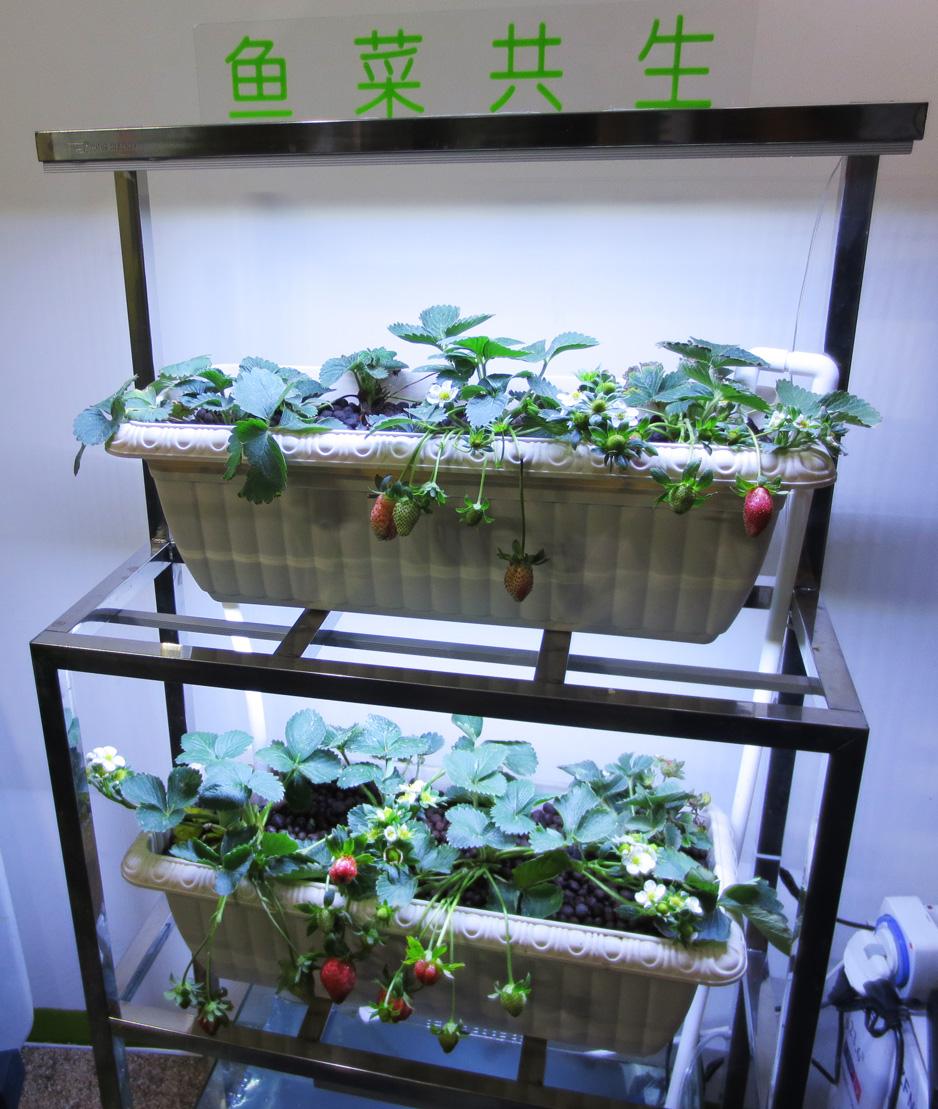 太阳能鱼菜共生盒